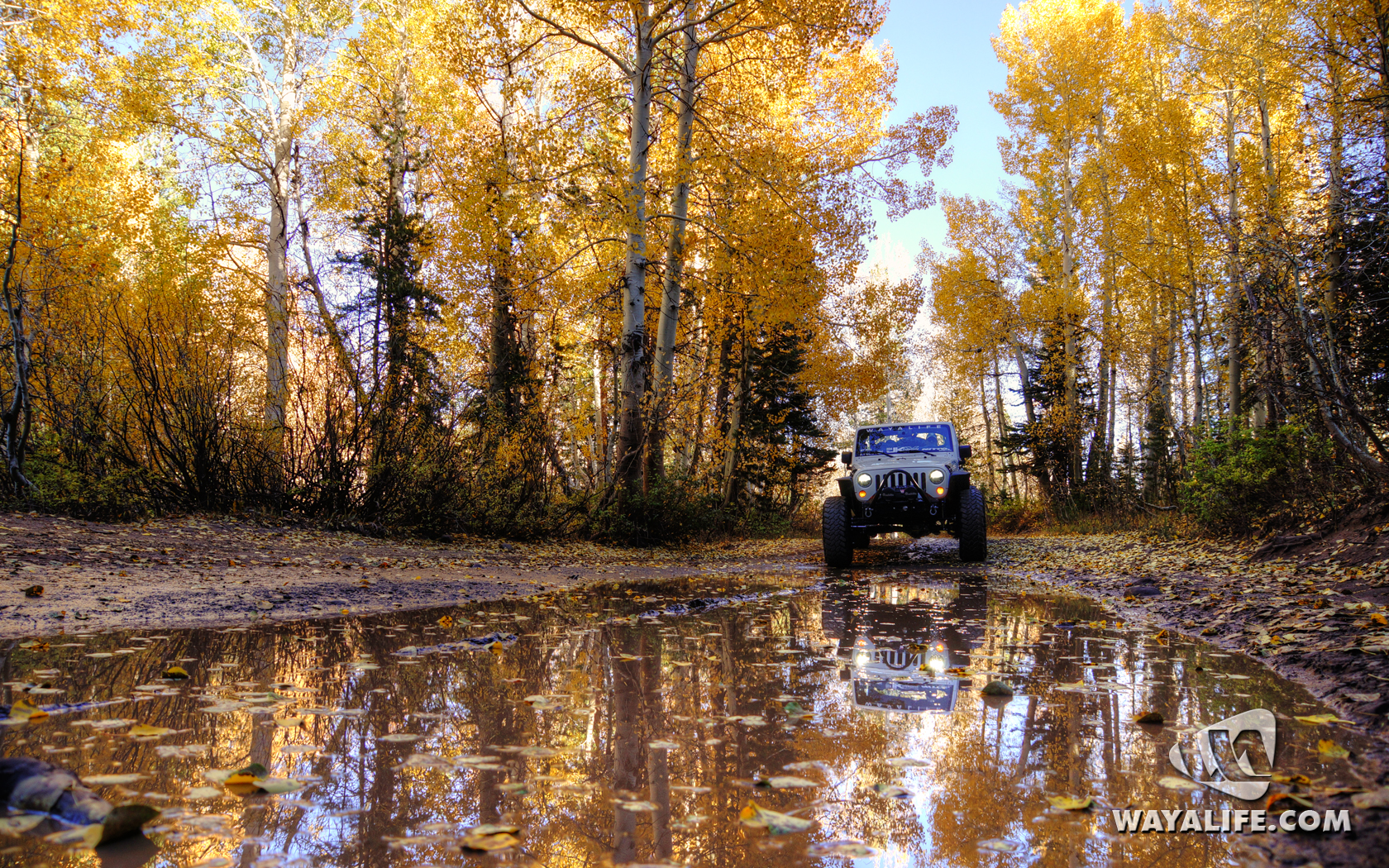 Carson City Jeep >> Show Off Your Fall Colors!!